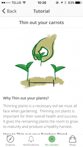managing-your-garden-tasks-04-thin