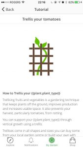 managing-your-garden-tasks-06-trellis